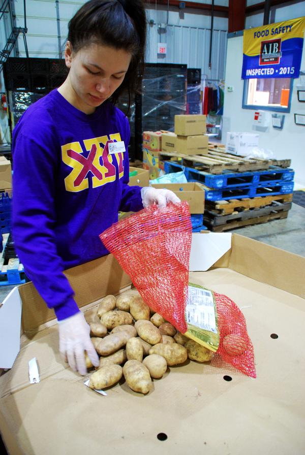 Ball State freshman Jessica McKenzie places potatoes back in the bag to be delivered at Second Harvest Foodbank in Muncie, Indiana. This is one of several ways students engage in the community, though many engage in more long-term ways.